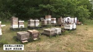 ハチミツ採取が最盛期