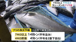 今シーズン 富山県内ブリ漁獲量は