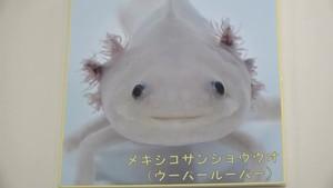 魚津水族館 海の生き物たちの表情を楽しむ企画展