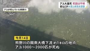 富山市の熊野川 アユ大量死 死因の特定に至らず